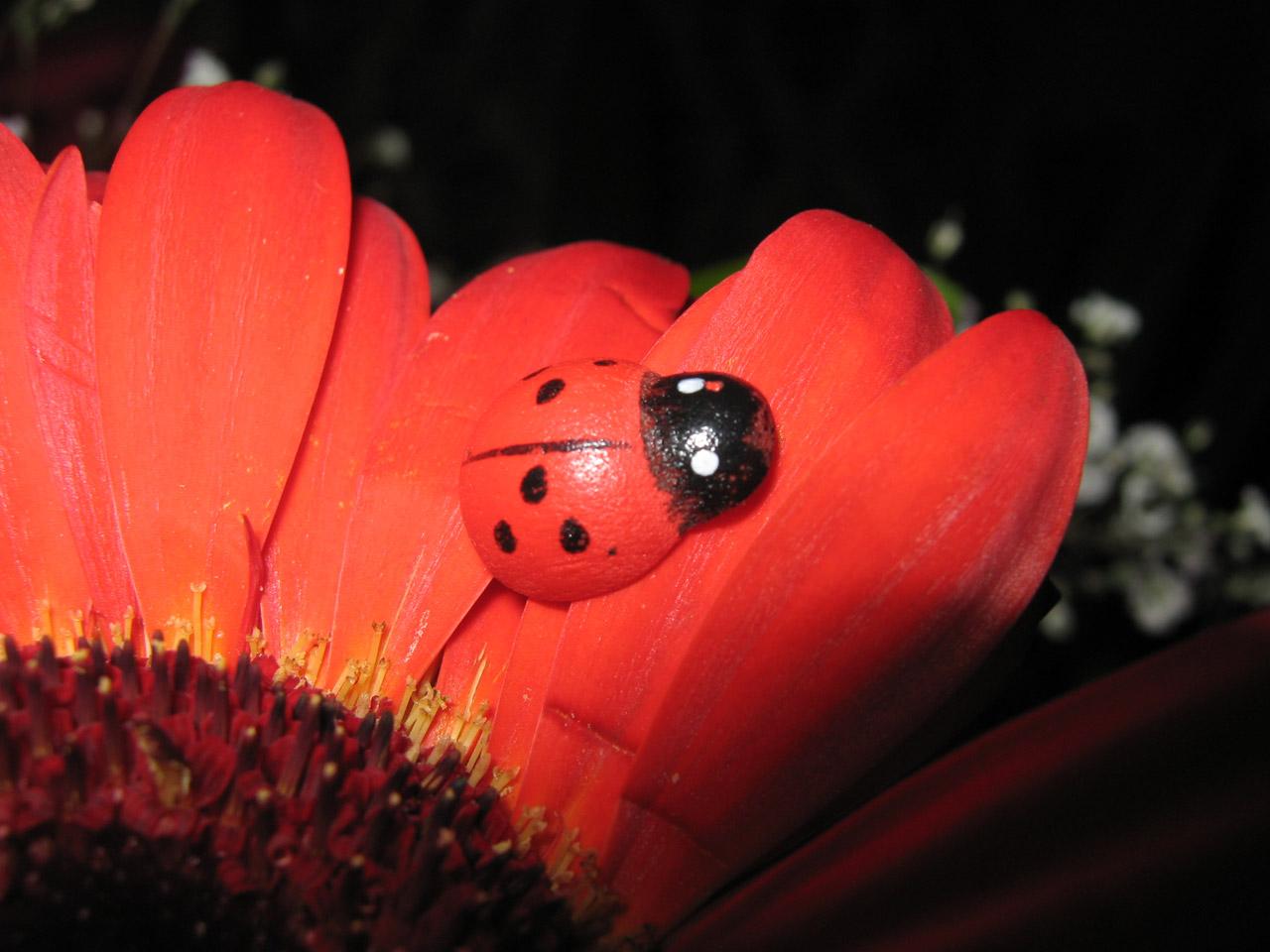 ladybird-on-orange-gerbera