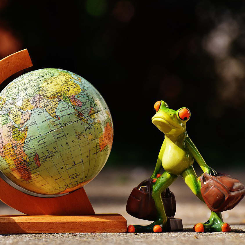 Frog getting ready to travel the world